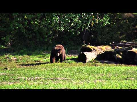 Pack Creek Bear Tour - Unseen Alaska - Sixel Consulting Group