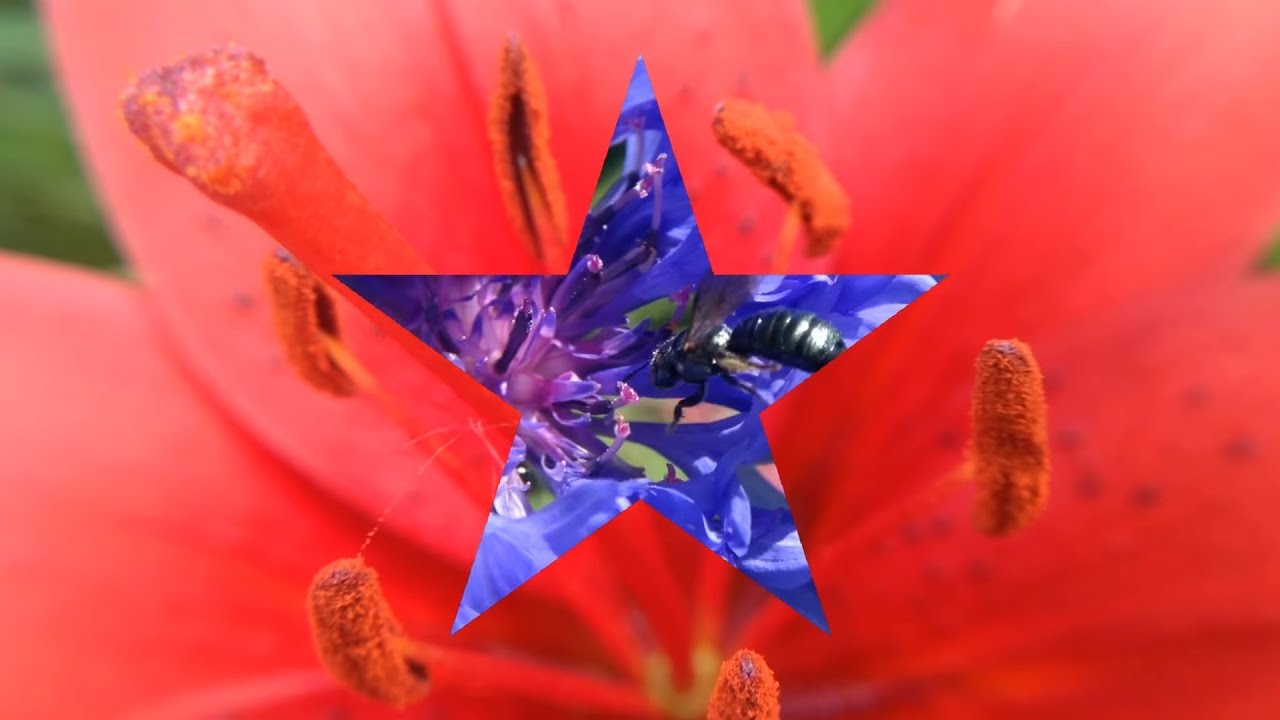 Red white blue flowers happy 4th of july youtube red white blue flowers happy 4th of july izmirmasajfo