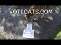 2 Ways To Support The Big Cats