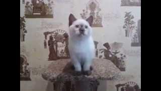 Продажа! Котёнок Каспер.(, 2014-07-19T08:56:03.000Z)