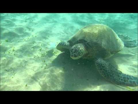 Turtle Snorkel at Ka