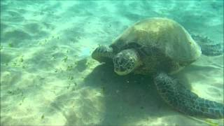 Turtle Snorkel at Ka'anapali Beach, Lahaina, Maui, Hawaii