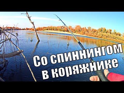 В этом КОРЯЖНИКЕ кипит ЖИЗНЬ. Рыбалка со спиннингом на реке Ахтуба