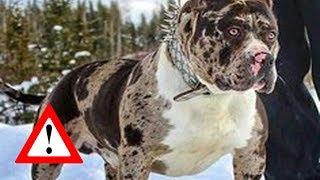 Top 10 Perros Que Son Para Expertos