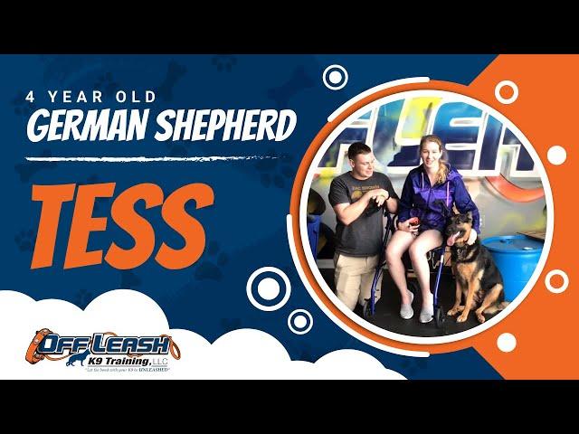 Service Dog Board and Train Prep!  Off Leash K9 Training | Service Dog Training