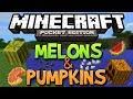 How To Get Pumpkins & Melons In Minecraft Pocket Edition (Pumpkin Pie & Jack o'Lanterns)