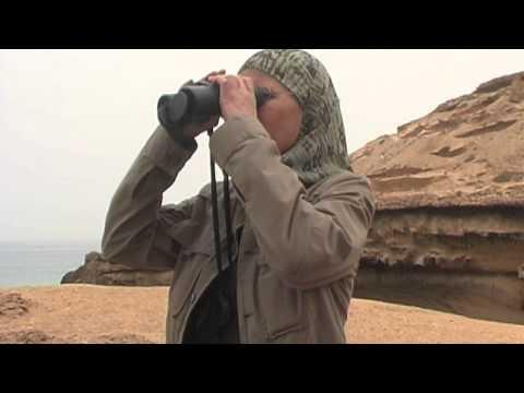 Saving the Northern Bald Ibis in Morocco