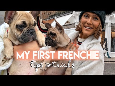 FRENCH BULLDOG - FRENCHIE PUPPY UPDATE, THINGS TO KNOW & TRAINING | Blaise Dyer