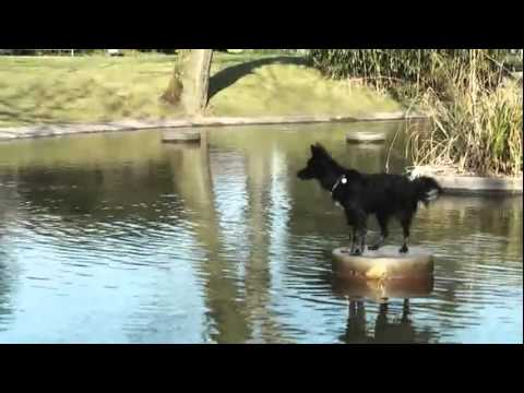 Funny Dog Rescue From Cold Water
