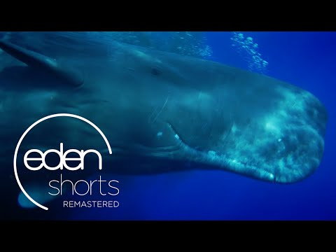 Phil Halper's Thus I Give Up The Spear | Eden Shorts Remastered