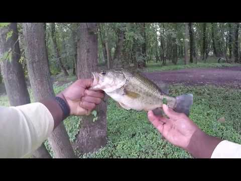NJ Cloudy Summer Day Bass Fishing (Passaic River Florham Park)