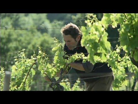 euronews science - Quand la vigne devient bio dynamique