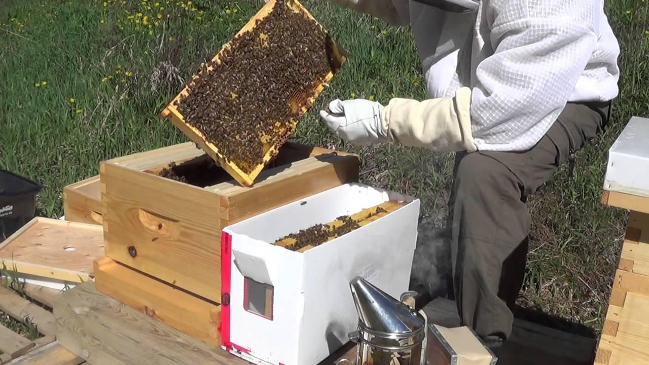 Beginner Bee Keeping - Installing First Nucs