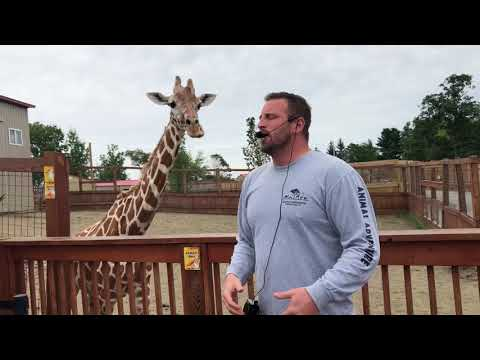 April the Giraffe Best Jordan Patch talk Tajiri Steals the Show