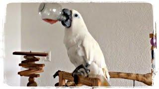 ПОПУГАЙ АЛКОГОЛИК и другие приколы с попугаями | Funny Parrots #661