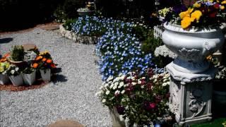 我が家の庭.
