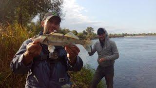 Рибалка на р. Дніпро у вересні.Окунь, щука, судачок .