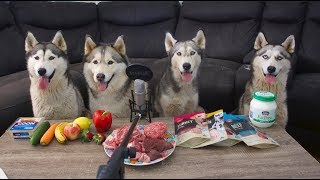 Download lagu MY 4 DOGS REVIEW FOOD | ASMR | TASTE TEST WITH 4 SIBERIAN HUSKIES | RAW MEATS, FRUITS & VEGETABLES!
