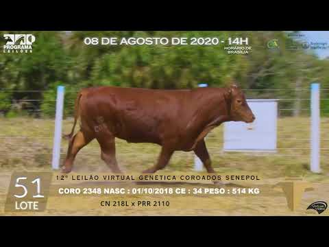 LOTE 51 CORO 2348