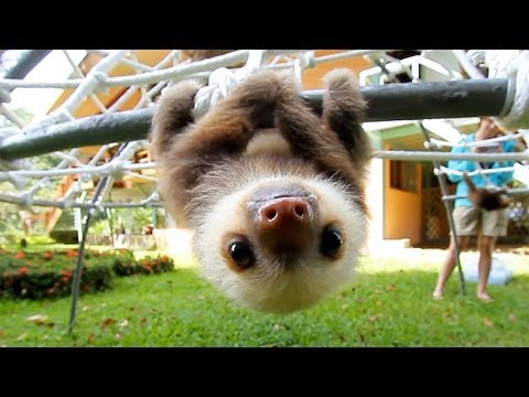 What Does A Sloth Say?