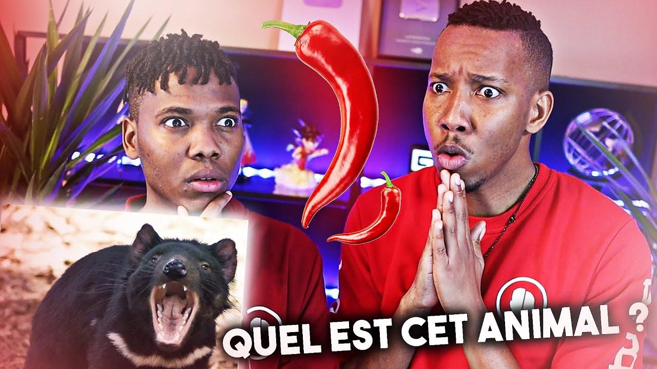 TU PERDS = PIMENT FORT 🥵 #1 - Les Parodie Bros