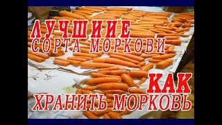 Сорта моркови.Как хранить морковь.