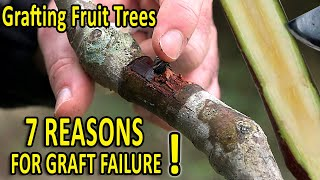 7 COMMON GRAFTING MISTAKES and HOW to AVOID THEM | Grafting Techniques TIPS