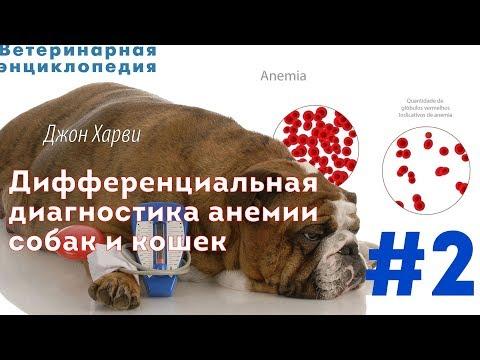 Дифференциальная диагностика анемии собак и кошек.Часть 2
