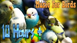 10 Hours+ || Calming Music For Birds || Budgies || Relaxing Music to Tame your Birds #3