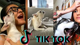 Funny Videos Of Talking and Singing Dogs Tik tok Compilations