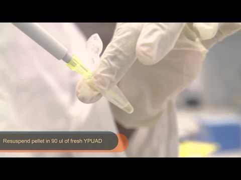 BS1007 - Cytochemistry, Endocytosis Assay