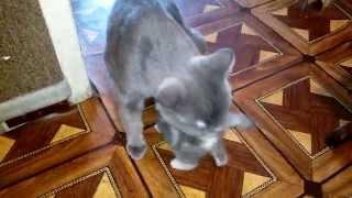 Самые милые котята (Часть 3) / Very sweet kittens (Part 3)