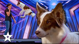Talents DOGS Do AMAZING Tricks For The Judges on America's Got Talent 2021   Got Talent Global