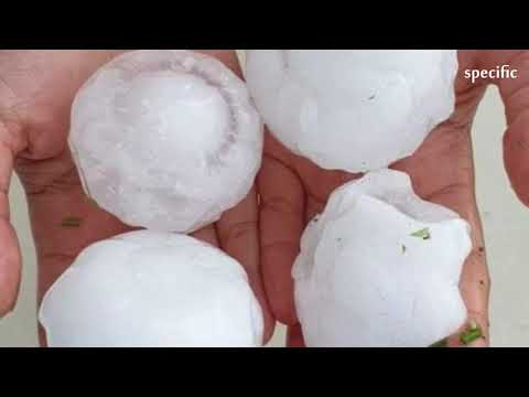 Australia news today  |  Giant hail falls in severe thunderstorms across Sydney