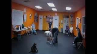 Puppy Kindergarten Group Classes With Urban Dawgs