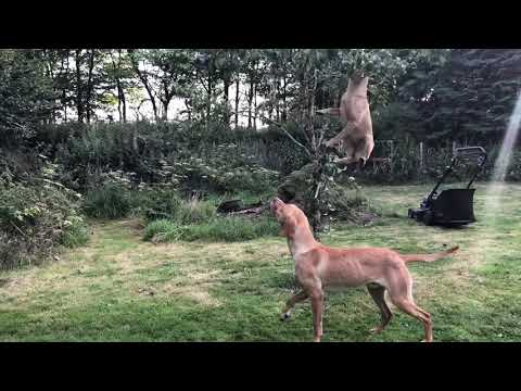 Athletic dogs. How to stop a dog from jumping up? Ignoring the behaviour didn't work for this tree!