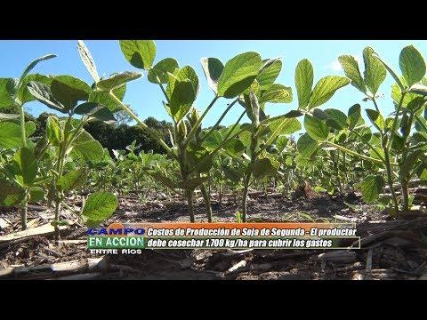 Patricia Engler - EEA INTA Parana - Soja de segunda: El productor debe cosechar 1.700 kg/ha para cubrir los gastos