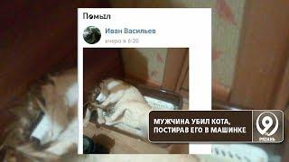 Житель Ухты постирал кота в стиральной машине. Животное погибло. «9 телеканал» Рязань