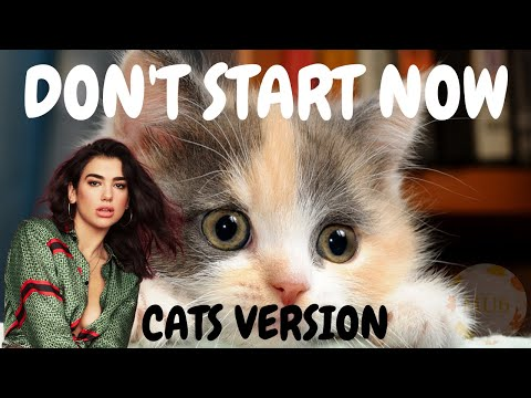 Cats Sing Don't Start Now by Dua Lipa | Cats Singing Song Parody