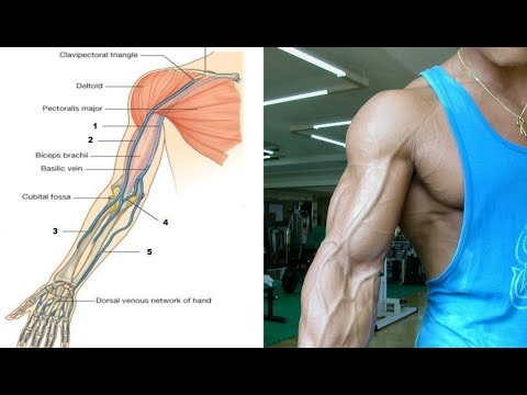 Download Youtube: How to get the Bicep Vein