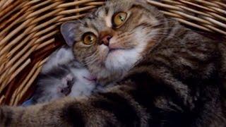 Mommy Cat Hugs her Baby Cute Kitten