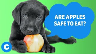 10 Fruits That Are Safe for Your Dog to Eat | Chewy