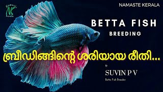 How to Breed Fighter Fish in Malayalam | Betta Fish Breeding | Malayalam | Namaste Kerala