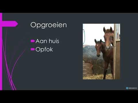 Webinar 2020 Het trainen van jonge paarden
