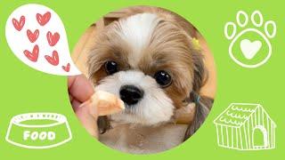 시츄 강아지의 초귀여운 동결건조 당근 먹방 MUKBAN…