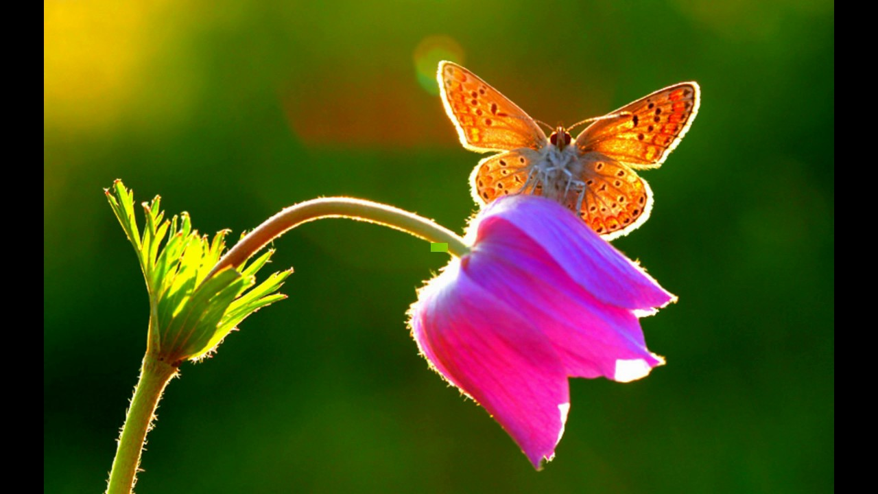 beautiful butterfly cute butterfly butterfly image