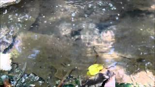 Fuentes termales río Barranca
