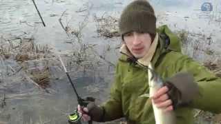 ловля щуки спиннингом в жабовниках видео : РД