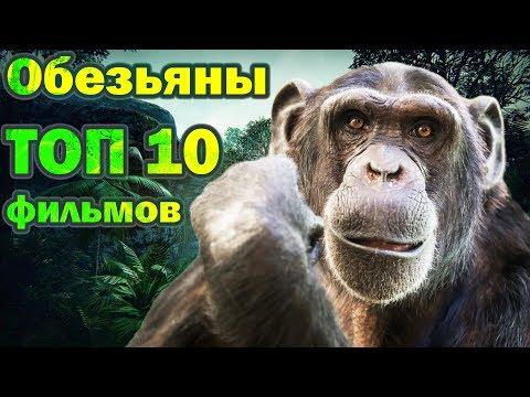Обезьяны ТОП 10 лучших фильмов