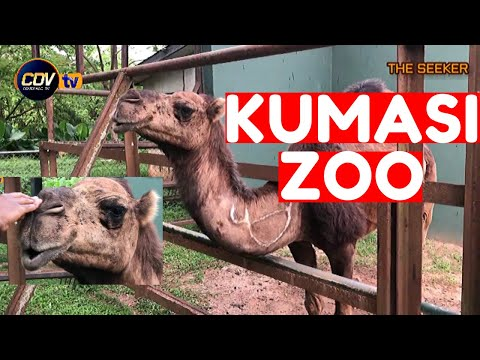Let's Tour the Kumasi Zoo: Enjoy this adventure with the Seeker Ghana.
